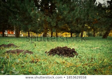 Natureza animal erva mamífero pequeno fauna Foto stock © fanfo