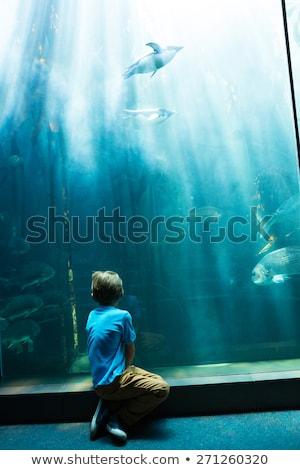 Genç oturma tank balık çocuk deniz Stok fotoğraf © wavebreak_media
