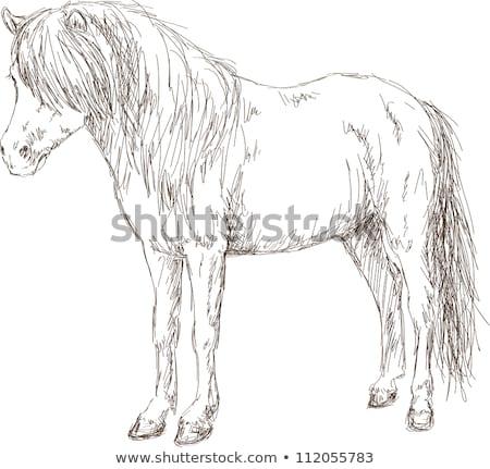 Shetland Pony vintage engraving Stock photo © Morphart