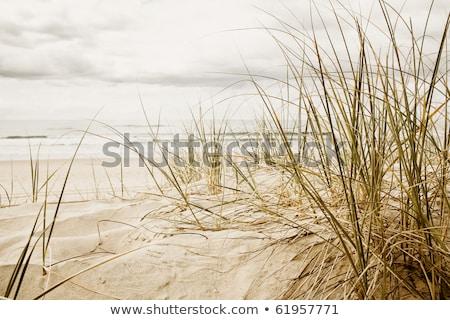 Grama praia tempestuoso temporada alto água Foto stock © meinzahn