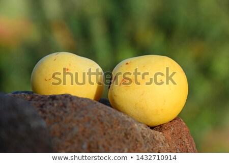 frutta · fiore · messa · a · fuoco · selettiva · arancione · verde - foto d'archivio © sahua