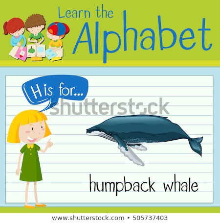 Flashcard letter H is for humpback whale Stock photo © bluering