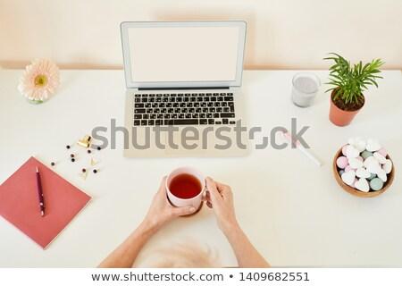 Herbera in hands Stock photo © pressmaster