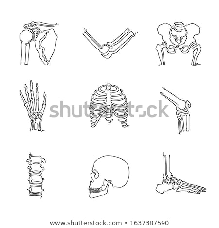 single line body parts pictograms set stock photo © decorwithme