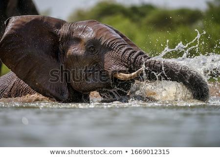 Afrika fil su kamera park Güney Afrika arka plan Stok fotoğraf © simoneeman