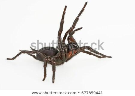 Mor örümcek beyaz örnek doğa arka plan Stok fotoğraf © bluering