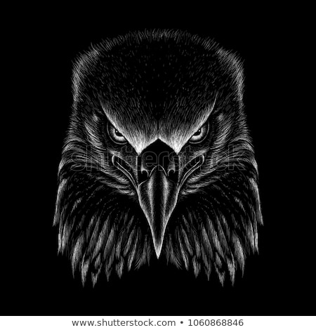 Stock photo: Face to face with a black eagle