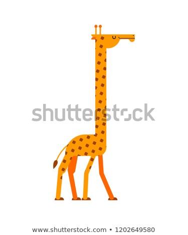 Giraffe portrait isolated. Wild animal. Beast long neck. Vector  Stock photo © MaryValery