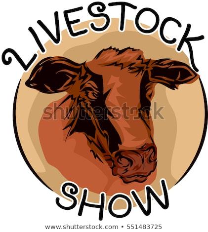 Show mucca icona illustrazione testa Foto d'archivio © lenm