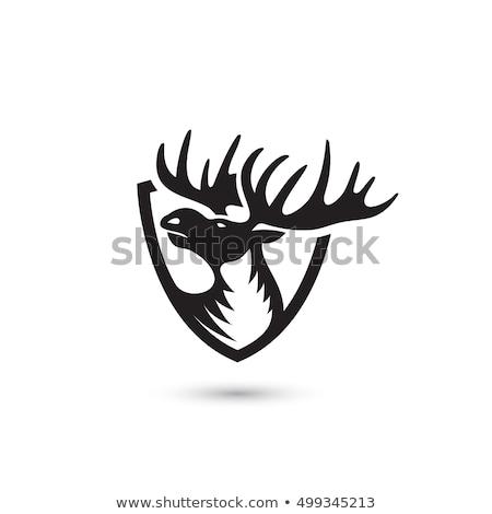 Bika jávorszarvas fej kabala ikon illusztráció Stock fotó © patrimonio