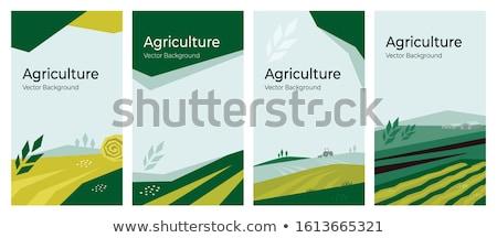 Buğday çiftlik poster traktör köpek pulluk Stok fotoğraf © robuart