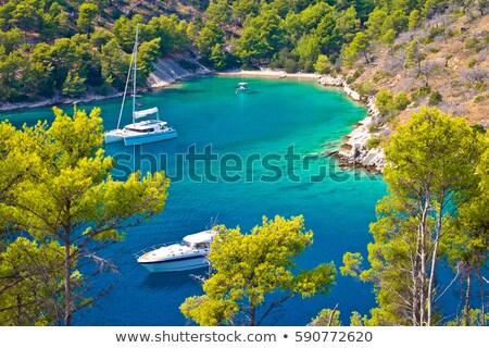 Ukryty turkus wyspa wybrzeża domu drzewo Zdjęcia stock © xbrchx