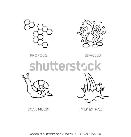 Cosmetische bestanddeel honing vector dun lijn Stockfoto © pikepicture
