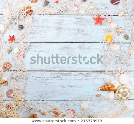 Sea shell background, summertime destination and beach holiday t Stock photo © Anneleven