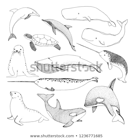 Sketch various sea creatures. Turtle, whale, walrus, dolphin and others. Stock photo © Arkadivna