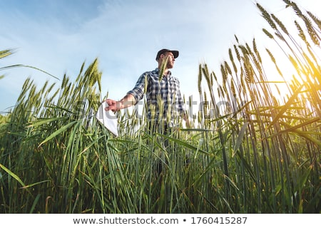 Sowing the wheat Stock photo © Stocksnapper