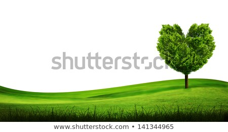 Alone Tree In Green Meadow Stok fotoğraf © SuriyaPhoto