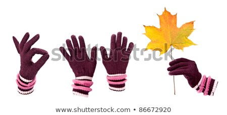 a collage of warm gloves with autumn maple leaf stock photo © ruslanomega