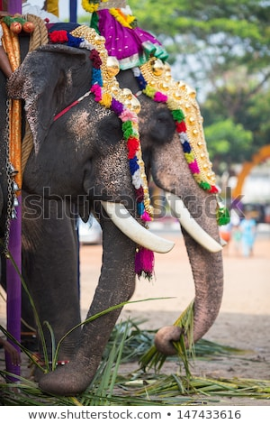 ornate elephant eating stock photo © smithore