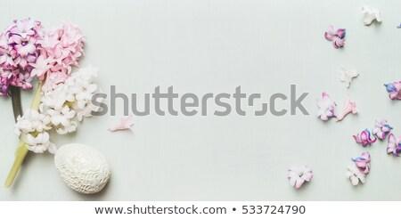 Szőlő jácint lila virág kék közelkép Stock fotó © michaklootwijk