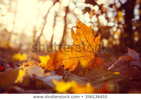 autumn leaf covered with frost stock photo © nature78