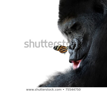 two gorillas which think stock photo © mariephoto