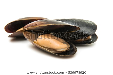 isolated mussel and shrimp Stock photo © M-studio