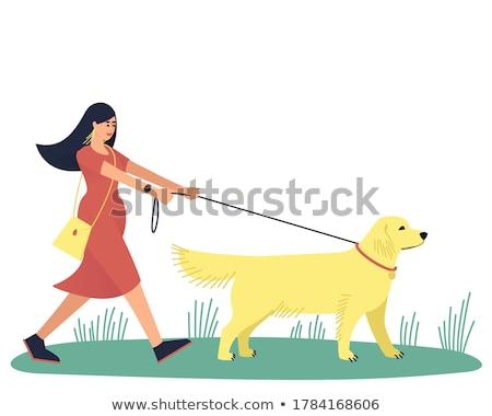 Attractive lady with her labrador dog Stock photo © konradbak