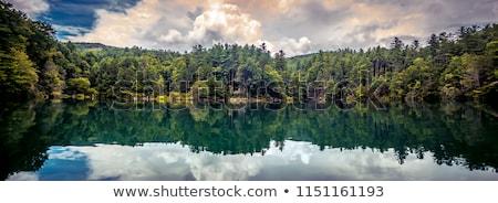 Cenário em torno de lago natureza South Carolina água Foto stock © alex_grichenko