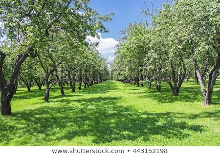 zöld · vidék · tájkép · fák · Németország · legelő - stock fotó © meinzahn
