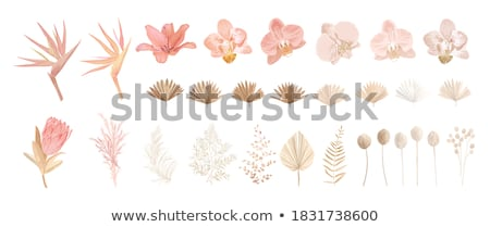 осень сушат цветы цветок фон ржавчины Сток-фото © kimmit