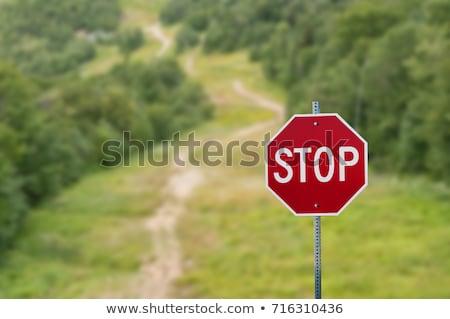 лес знак остановки весны зеленый листьев красный Сток-фото © kimmit