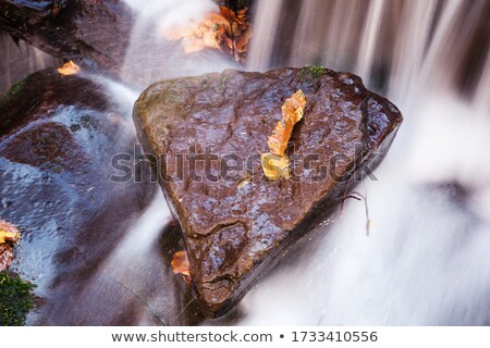 Maple leaf resting on a moss covered rock Stock photo © tang90246