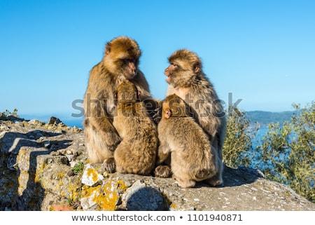 majom · szabadtér · fa · erdő · természet · háttér - stock fotó © razvanphotography
