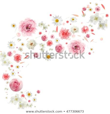 цветочный · ветер · аннотация · дизайна · круга - Сток-фото © x7vector