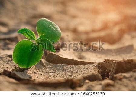 Planta de semillero creciente agrietado secar suelo 3d Foto stock © kjpargeter