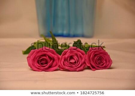grafik · güller · yaprakları · örnek · çiçek · gül - stok fotoğraf © bluering