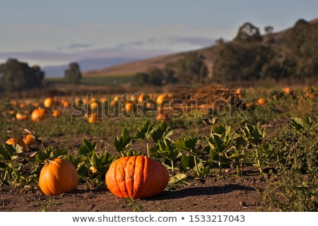 Stock photo: pumpkin half