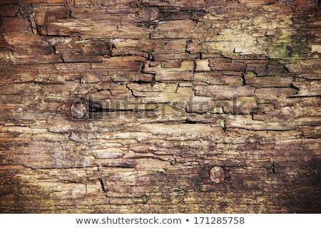Rot hout bos berk Stockfoto © Mps197