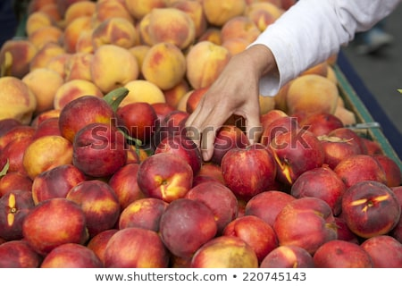 Pêssegos mãos frutas frescas colheita agricultores Foto stock © mythja