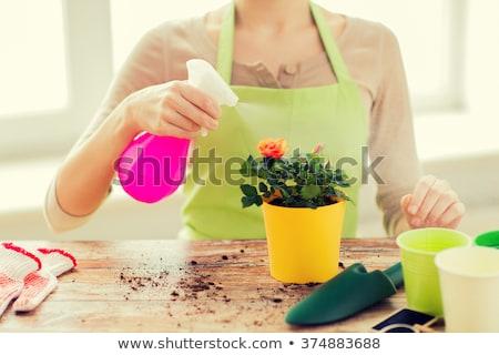 Közelkép nő ültet locsol rózsák kertészkedés Stock fotó © dolgachov