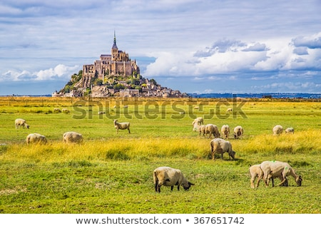 Mont Saint Michel with sheep on blue sky Stock photo © doomko