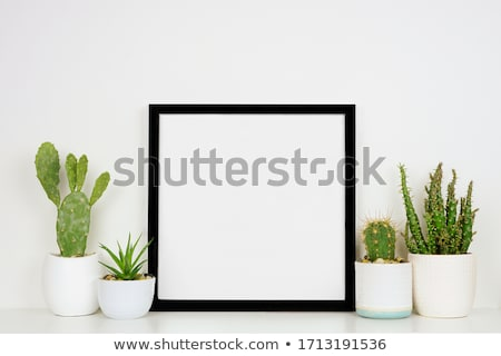 Fronteira modelo cacto plantas ilustração fundo Foto stock © colematt