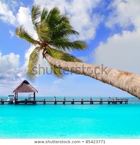 Sziget pálma tengerpart Mexikó természet tartalék Stock fotó © lunamarina