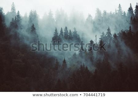 Orman sahne örnek su doğa dizayn Stok fotoğraf © bluering