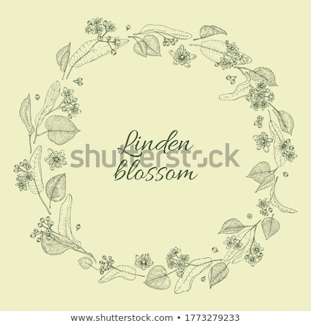LINDEN BLOSSOM  tea .. style vintage. Stock photo © zoryanchik