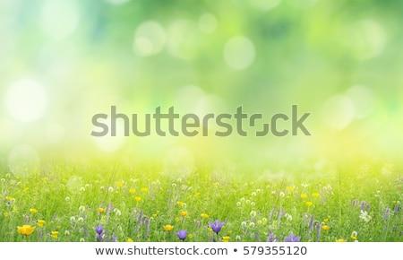 Fű nyár tavasz illusztráció virágok húsvét Stock fotó © biv