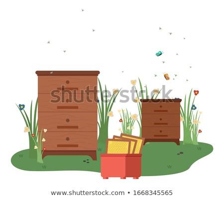 Schubladen unter Bienen Landwirtschaft Vektor Wachs Stock foto © robuart