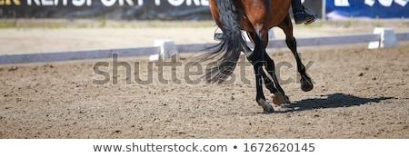 馬 · レース · 1 · ジョッキー · 男性 - ストックフォト © netkov1