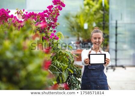Fiatal női vállalkozó kötény néz tabletta Stock fotó © pressmaster